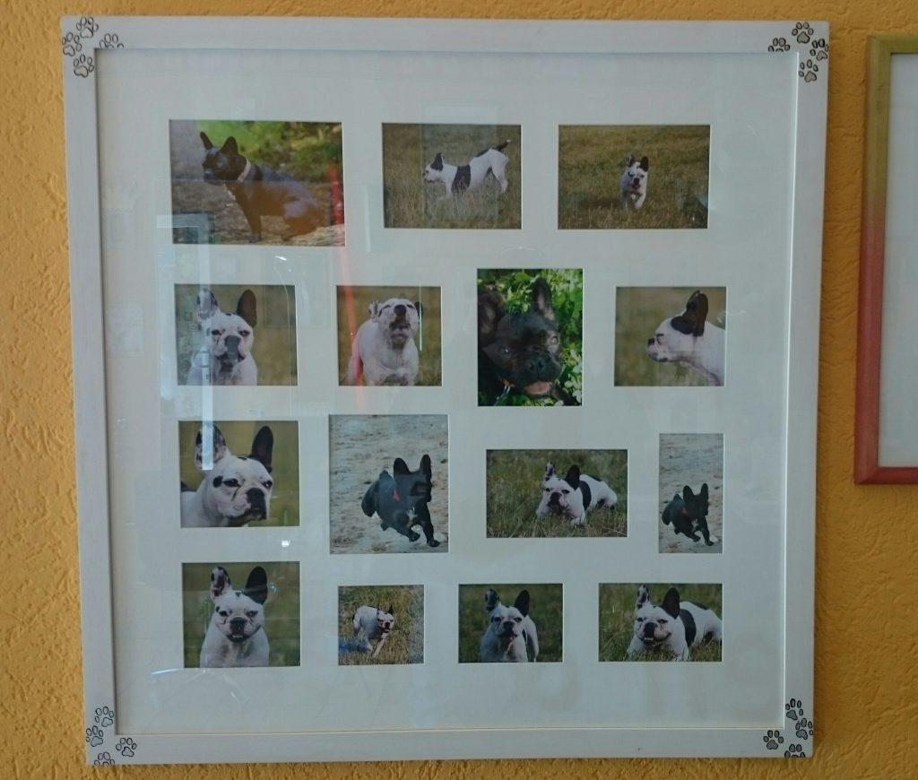 Einrahmung Hundefotos im                Pfötchenrahmen